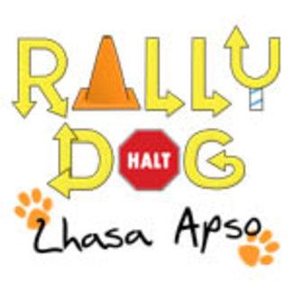 Lhasa Apso Rally Dog
