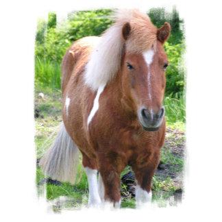 Paint Quarterhorse