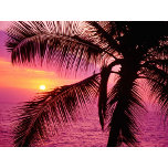 Tree Watching the Sunset.jpg