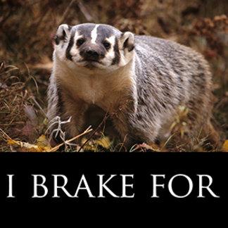 I Brake For Wildlife