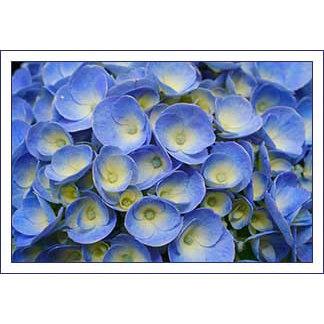 Flowers (Azores)