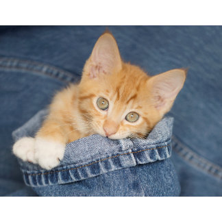 Blue Denim Kitty
