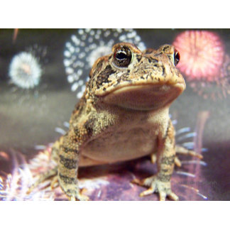 Toad frog on firework backgrounds photograph pic