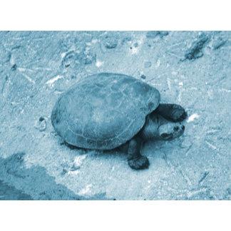 water turtle bank reptile animal blue