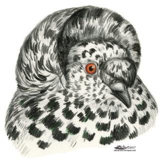 Trumpeter Pigeons