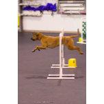 Charlotte jump.jpg