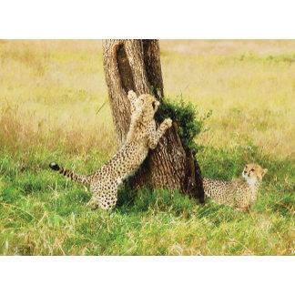 * Cheetah big cat