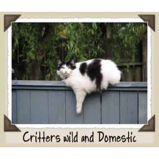 CRITTERS WILD AND DOMESTIC