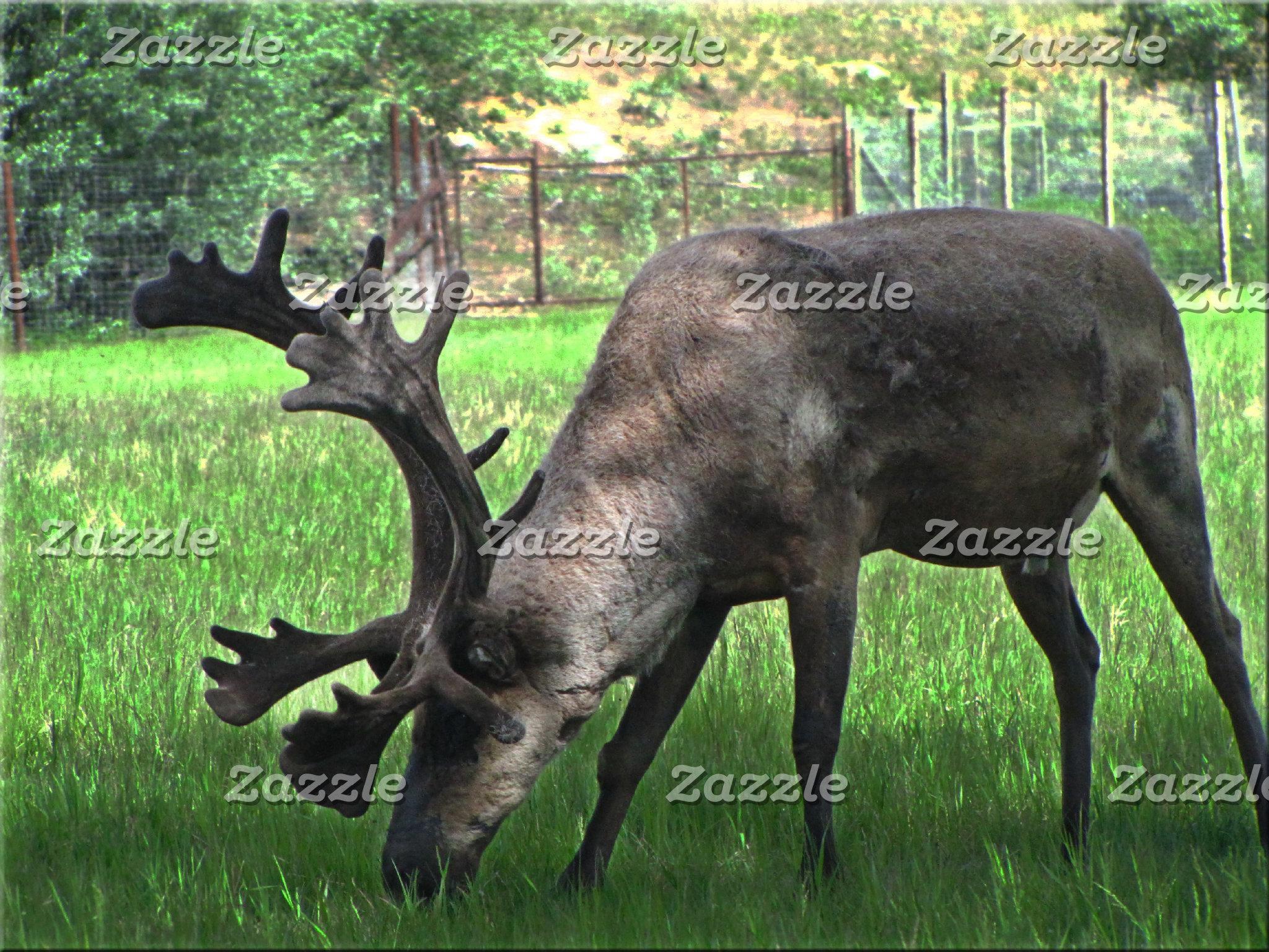 Wildlife-Large Land Animals