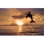 dolphin-animal-600x375.jpg