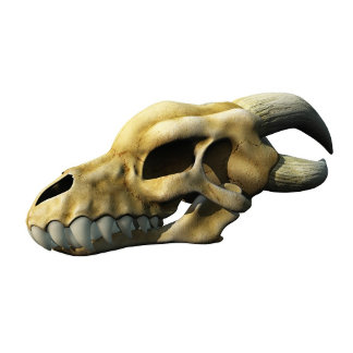 Horned Dragon Skull