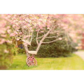 Cherry Blossoms and Wagon Wheel