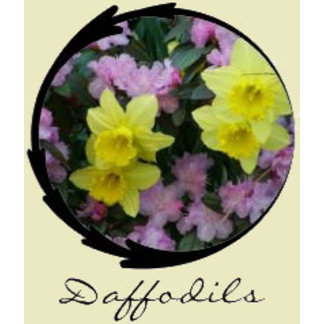 Daffodil/Narcissus Gifts