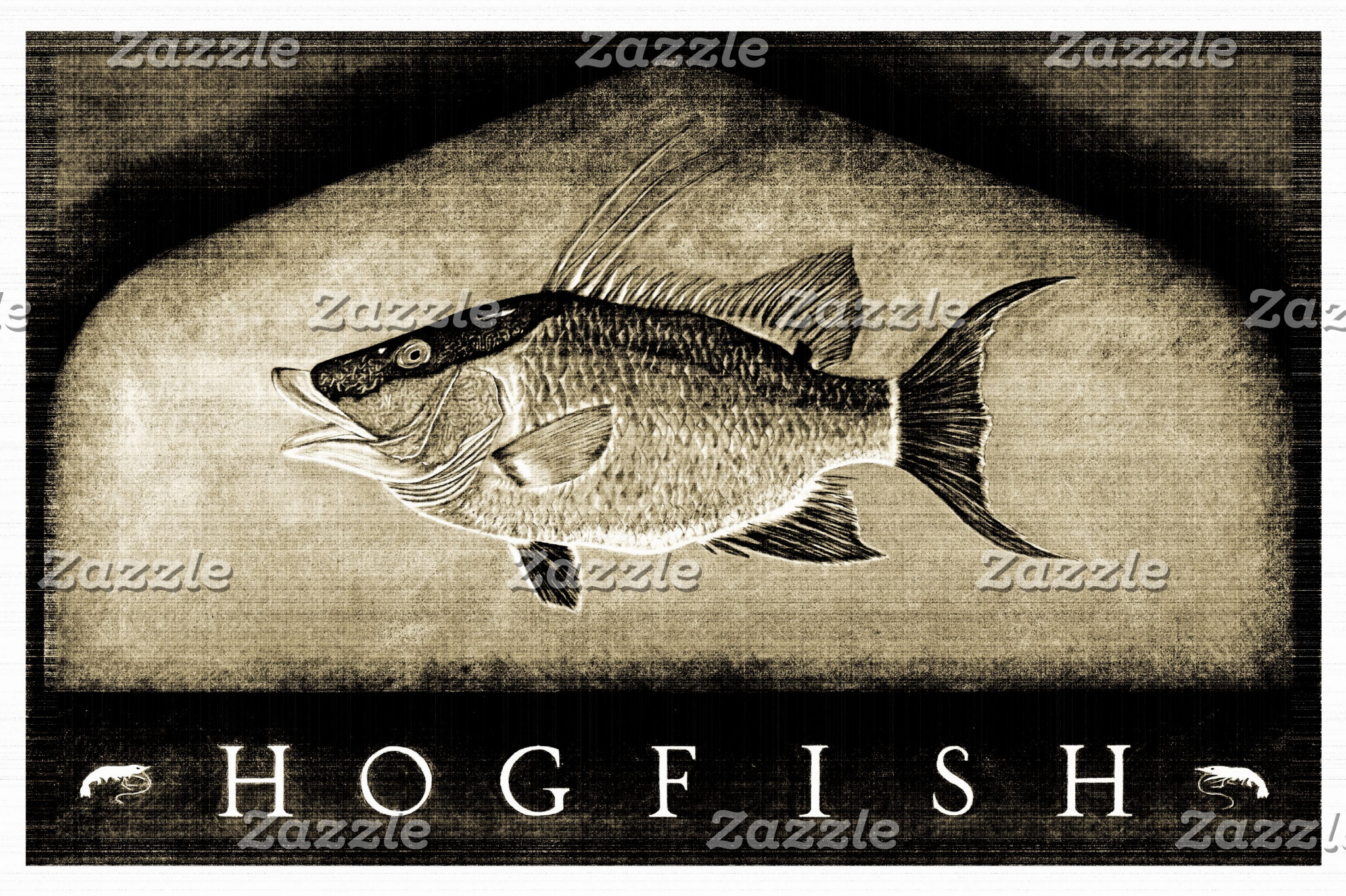 Hogfish Vintage Black & White