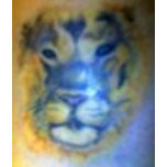Lion Tattoo.jpg