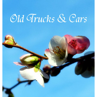 Old Cars/Trucks