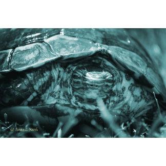 Wood turtle ornate head on in grass blue