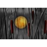 The moon reeds.jpg