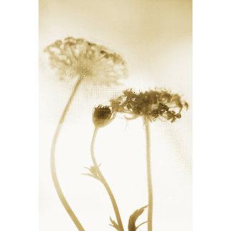 """floral 2.Queen Annes lace poster print"""
