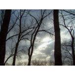 sky trees resized.jpg