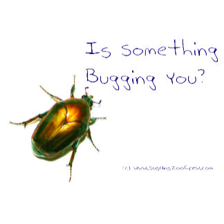 Is Something Bugging You?