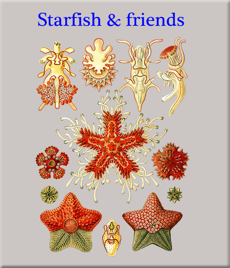 Starfish, Sea Urchins, Crinoids