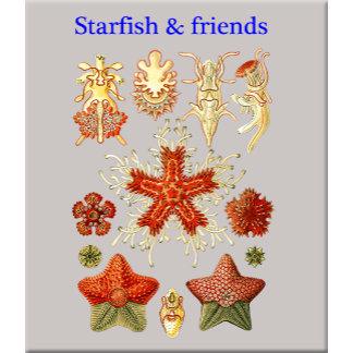 Starfish, Urchins & Crinoids