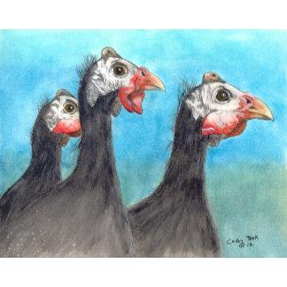 Guinea Fowl & Chickens