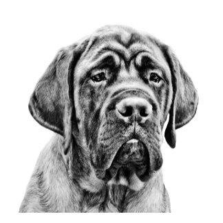 Cute Mastiff puppy dog
