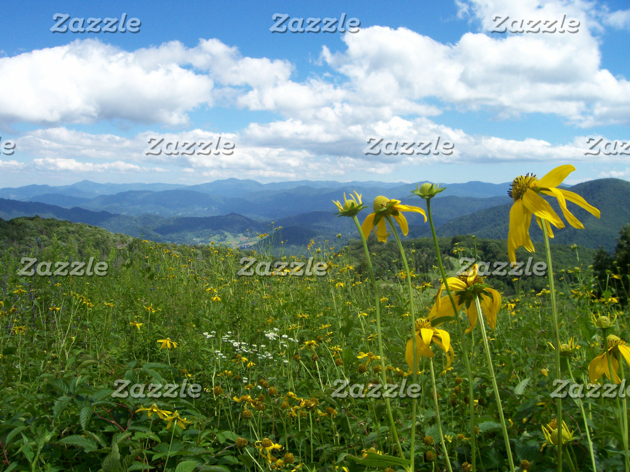 Wildflowers at Purchase Knob