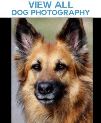 Dog Photo Image Merchandise