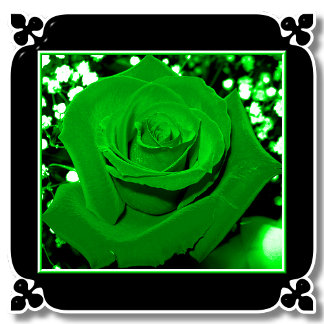BRIGHT GREEN ROSES