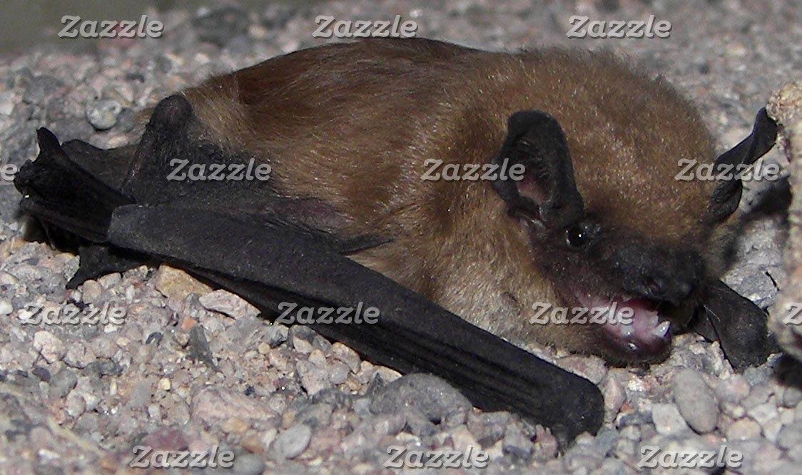 Bats & Cave Exploring