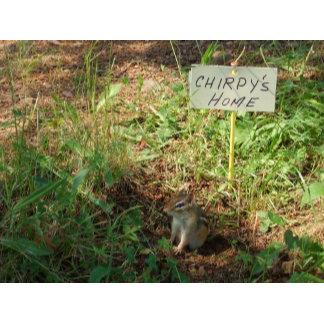Chipmonk in feeder