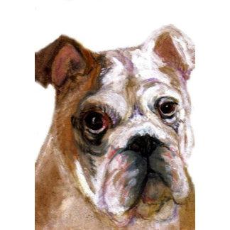 Young English Bulldog