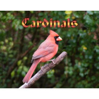 Cardinal 12 Month Wall Calendar 2015