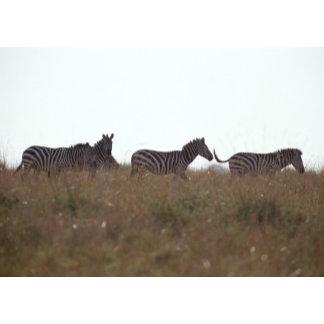 Grant Zebra 7