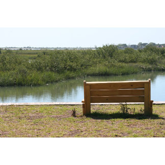 bench by river savanas type area