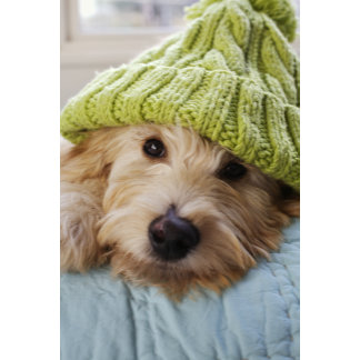 """Dog in Stocking Cap Photo Poster Print"""