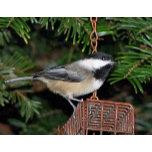bird on feeder card card.JPG