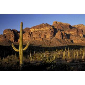 NA, USA, Arizona. Organ Pipe Cactus National 2