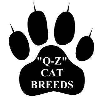 """""""Q-Z"""" Cat Breeds"""