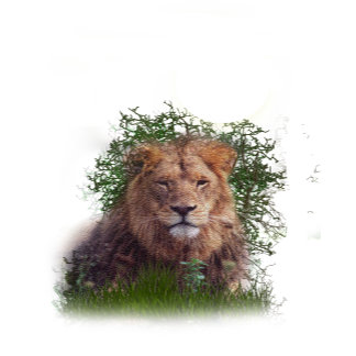 Lion t-shirts and posters