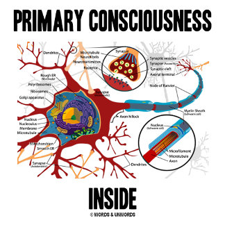 Primary Consciousness Inside (Neuron / Synapse)
