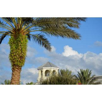 Florida scene palm tree spire blue sky