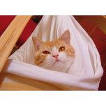 Sweet-cat.png
