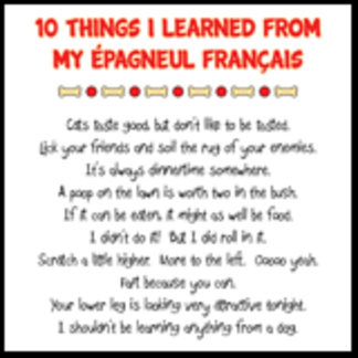 10 Things I Learned From My Épagneul Français Joke