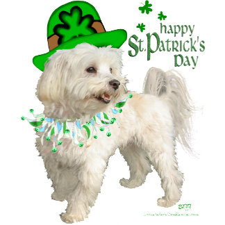 St PATRICKs DAY - Maltese / Poodle Mix
