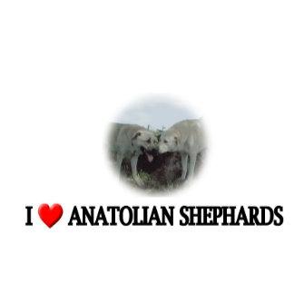 I heart  Anatolian shepherds