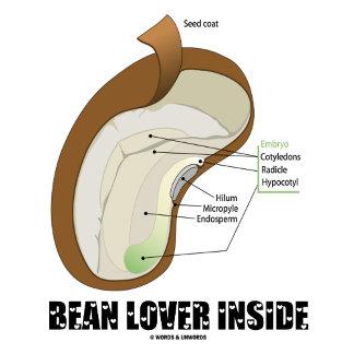 Bean Lover Inside (Bean Dicotyledon)